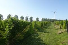 Wilde-Wijngaard-08697